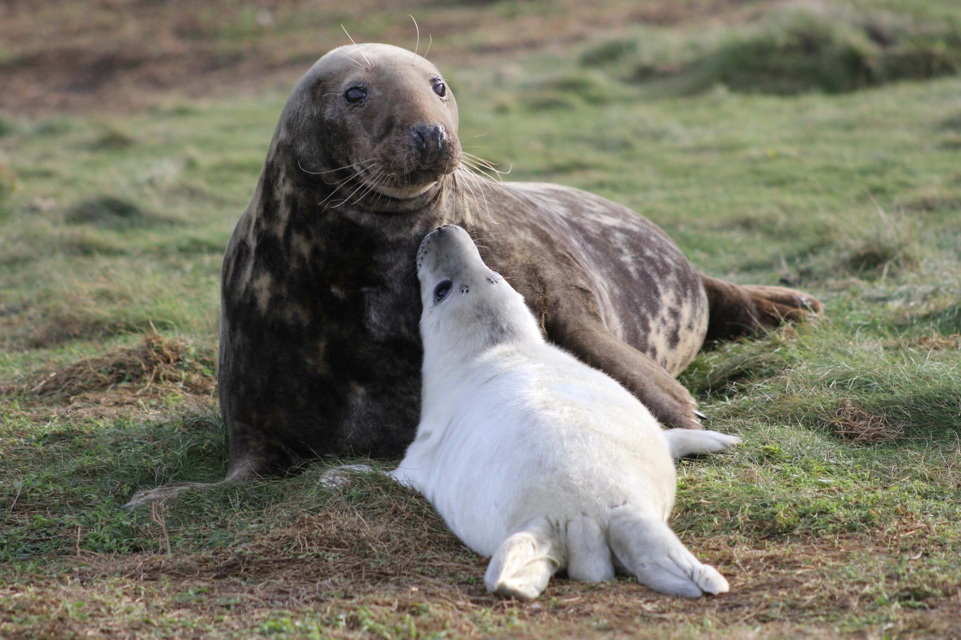 A seal with seal pup