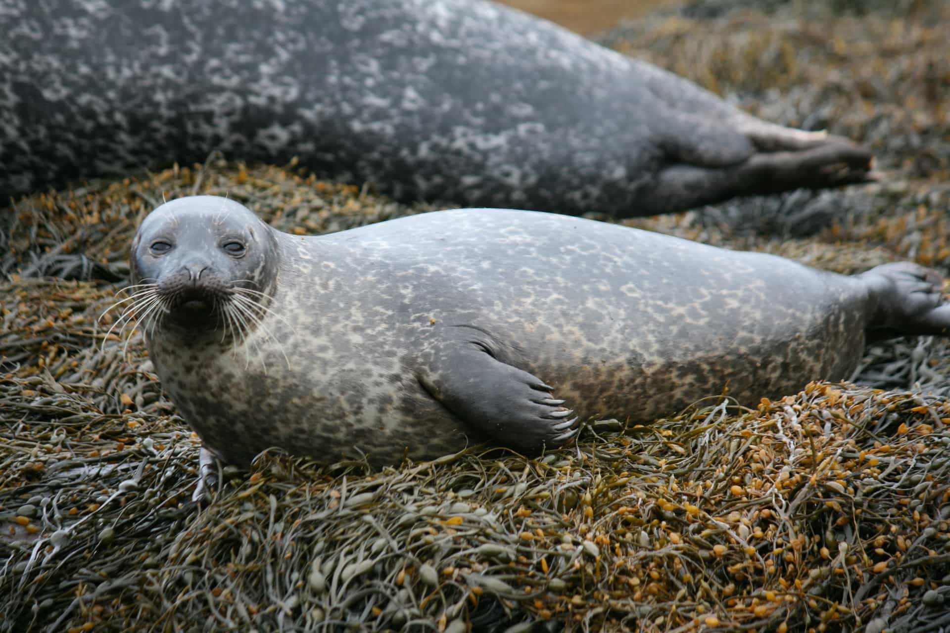 A photo of a seal
