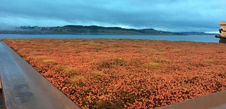 A green roof in Broughty Ferry