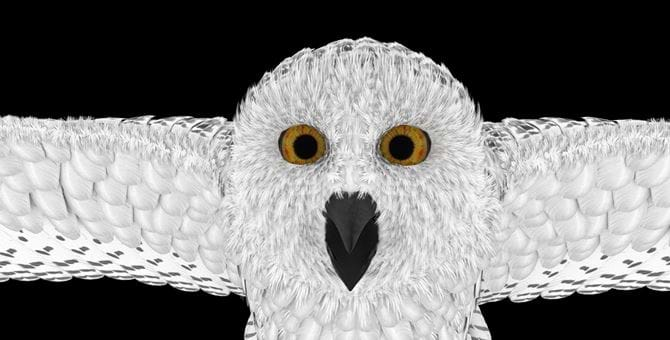 A screenshot of an owl animation from Abertay studentsy