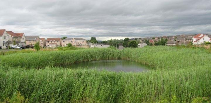 small pond surrounded by grass - houses in the background
